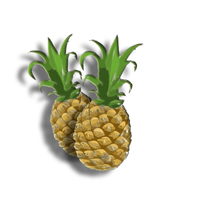 When is pineapple in season?